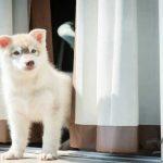 4 نکته برای انتخاب پرده مناسب برای حیوانات خانگی